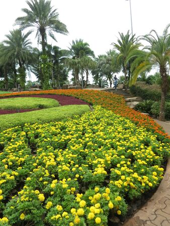 Garden with flowers and palm tree
