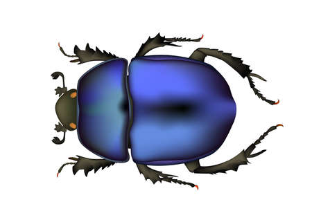 lady bugs insect blue