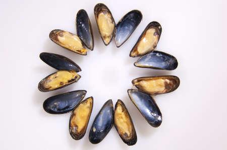 crustacean: Mussel Crustacean