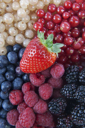 cholesterol free: Mixed Berries
