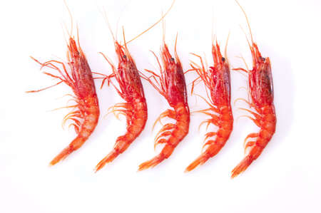 Shrimp, red and orange on a white background photo