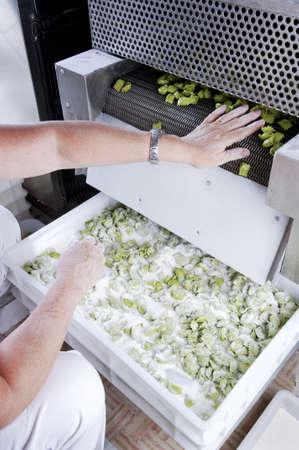 Geautomatiseerde voedsel factoy zijn uitstekende verse pasta Stockfoto