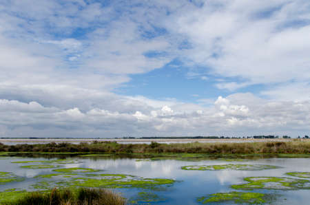 humid south: Camargue landscape on a day with clouds and blue sky reflected in the water Stock Photo