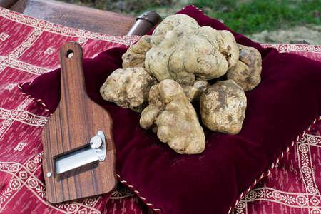 truffe blanche: Truffes blanches reposant sur un oreiller rouge avec une trancheuse de truffes secondaires