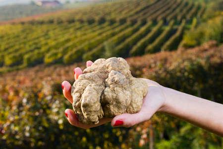 Witte truffels uit Piemonte, Italië, in de handen van een vrouw op de achtergrond een landschap van heuvels met wijngaarden van Langhe