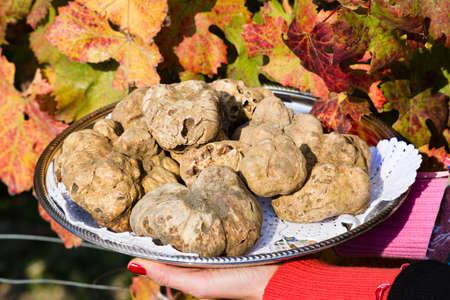 truffe blanche: La truffe blanche du Piémont sur le plateau tenue par les mains d'une femme dans l'arrière-plan des feuilles d'un vignoble à l'automne Banque d'images