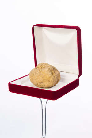 white truffle: Still life of a truffle in a red box for jewelry on the white background