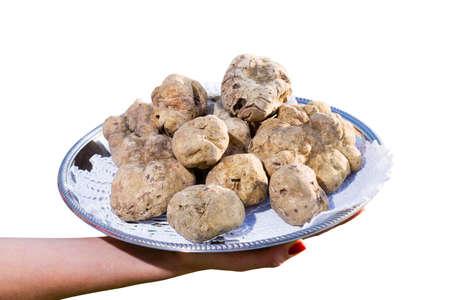 truffe blanche: Beaucoup de truffes blanches du Piémont sur le plateau en acier placés sur un fond blanc