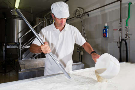 rennet: Cheesemaker pours rennet in a large tank full of milk steel Stock Photo