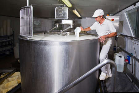Cheesemaker pours rennet in a large tank full of milk steel Standard-Bild