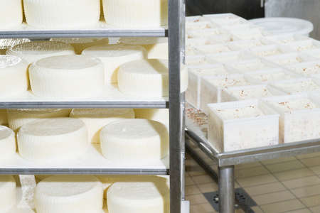 maturing: Pieces of fresh cheese on the shelves ready for the maturing Stock Photo
