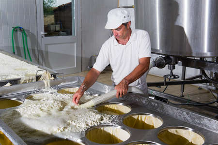 Cheesemaker pours cheese just curdled in the forms for the maturing Standard-Bild
