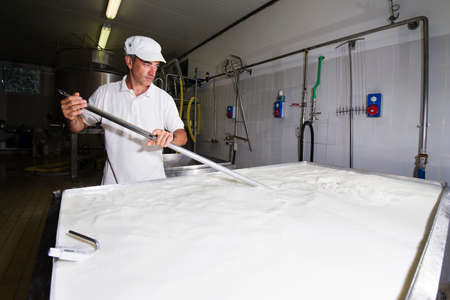 milk production: Cheese maker mixing the milk in a large stainless steel tanks