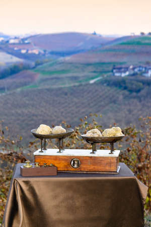Some white truffles on the vintage scales, in the background hills with vineyards in autumn Langhe Piedmont Italy Stock Photo