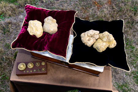 europe travel: Some white truffles on the scales vintage with red pillows view from above
