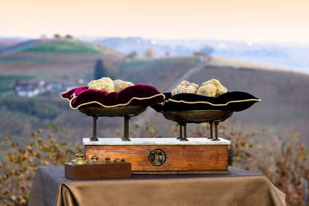 red pillows: Some white truffles on the vintage scales with red pillows, on background hills with vineyards in autumn Langhe Piedmont Italy