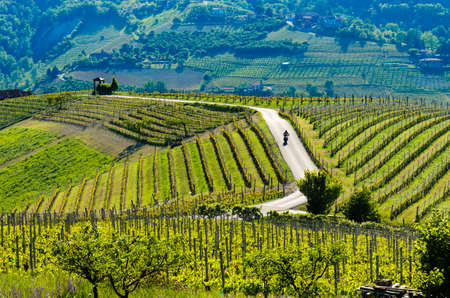 Motorcyclist on the road passing through the hills and vineyards . Stockfoto