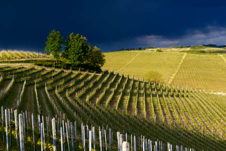 View of vineyards and Langa hills during a thunderstorm, suggestive contrast between dark skies and vineyards illuminated by the afternoon sun Archivio Fotografico