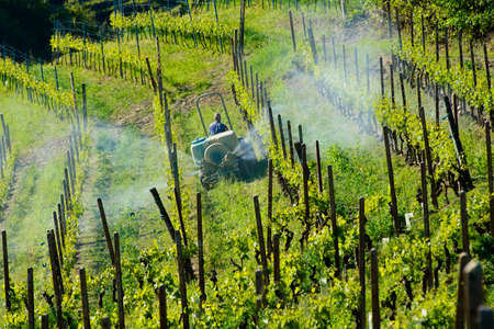 Farmer with tractor between vineyards for the chemical treatment of grapes Фото со стока