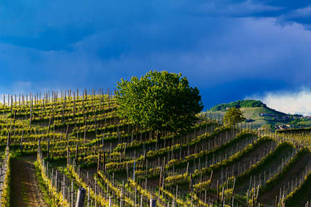 View of vineyards and Langa hills during a thunderstorm, suggestive contrast between dark skies and vineyards illuminated by the afternoon sun Stock Photo