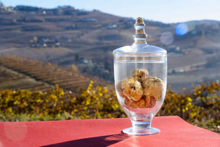 Wonderful White truffle inside a transparent glass jar, on the bottom the fantastic hills with vineyards in the fall