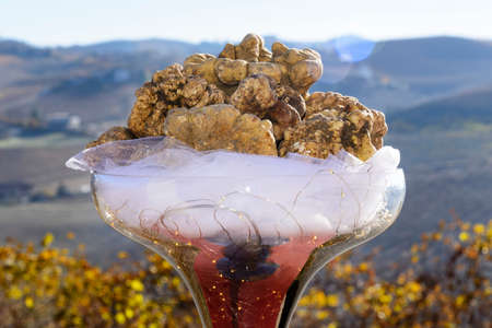 Wonderful white truffles of the Langhe, Piedmont Italy, over a cup, at the bottom the fantastic hills with vineyards in the fall