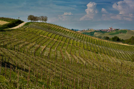 View on hills with cultivated vineyards and woods