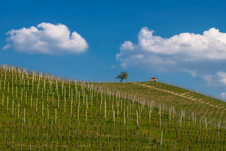 View of the winding hills over the vineyards and clouds in the Langhe Piedmont, the sky is blue, on the top a tree and a small house