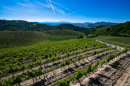 Wonderful vineyards and woods on the Cascina Saliceti hillside site in the Municipality of Montegioco Piedmont Italy, the sky is blue Banco de Imagens - 127788534