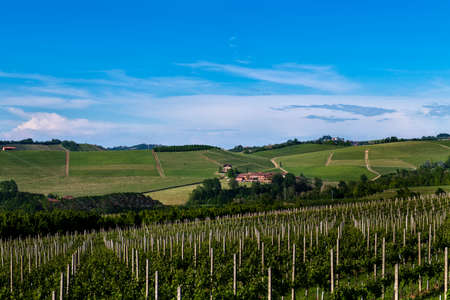 Green and lush vineyards on the beautiful hills in the Roero Piobesi d'Alba area of Piedmont Italy, the sky is clear and blue Banco de Imagens - 127788537