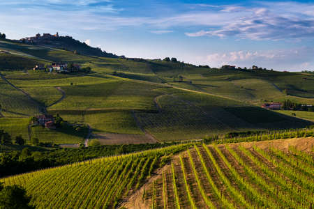 Wonderful vineyards and woods on the Sarmassa hillside located in the Municipality of Barolo Piedmont Italy, the sky is blue with beautiful clouds Banco de Imagens - 127788541