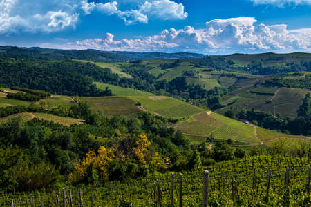 Green and lush vineyards on the hills of the Meruzzano slope in the Langhe Barbaresco area in Piedmont Italy, the sky is blue with wonderful clouds Banco de Imagens - 127788542