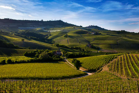 Wonderful vineyards and woods on the Sarmassa hillside located in the Municipality of Barolo Piedmont Italy, the sky is blue with beautiful clouds Banco de Imagens - 127788543