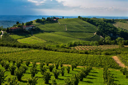 Wonderful vineyards and woods on the Cappelletto hillside site in the Municipality of Trezzo Tinella Piedmont Italy, in the sky you see a thunderstorm coming