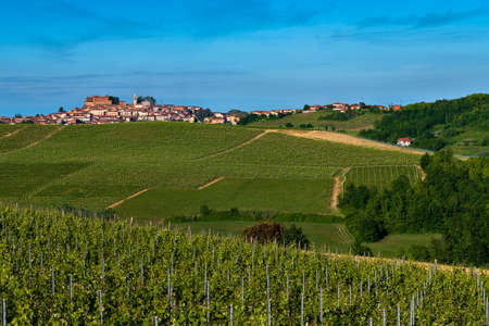 Wonderful Vineyards and Woods on the Montalbera Hillside located in the Municipality of Castagnole Monferrato Piedmont Italy, the sky is blue Banco de Imagens - 127788548