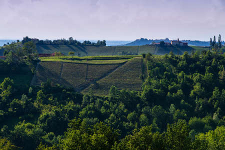 Vineyards and woods on the Pianezzo hillside situated in the Municipality of Dogliani Piedmont Italy, on the hills buildings and chies, the blue and cloudy sky Banco de Imagens - 127788549