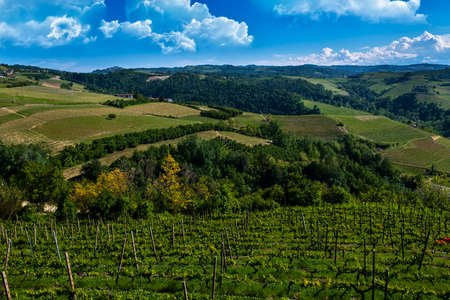 Green and lush vineyards on the hills of the Meruzzano slope in the Langhe Barbaresco area in Piedmont Italy, the sky is blue with wonderful clouds Banco de Imagens - 127788550