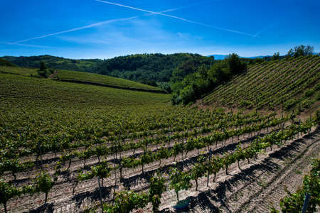 Wonderful vineyards and woods on the Cascina Saliceti hillside site in the Municipality of Montegioco Piedmont Italy, the sky is blue Banco de Imagens - 127788513