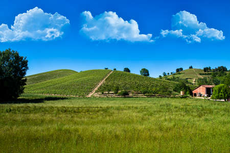 Wonderful vineyards and woods on the Monte Dell'Olmo hillside located in the municipality of Vinchio Piemonte Italy, the sky is blue with fantastic clouds Banco de Imagens - 127788515