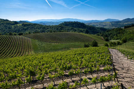 Wonderful vineyards and woods on the Cascina Saliceti hillside site in the Municipality of Montegioco Piedmont Italy, the sky is blue Banco de Imagens - 127788518