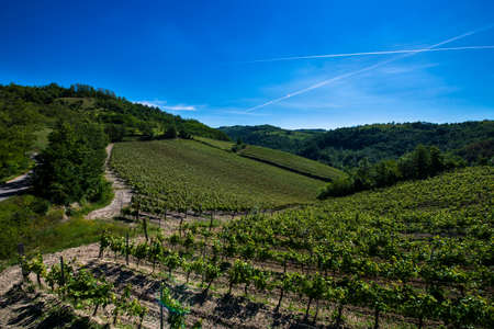Wonderful vineyards and woods on the Cascina Saliceti hillside site in the Municipality of Montegioco Piedmont Italy, the sky is blue Banco de Imagens