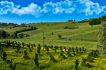 Wonderful vineyards and woods on the hillside Bricco Lù located in the municipality of Costigliole d'Asti Piedmont Italy, the sky is blue with magnificent clouds Banco de Imagens - 127788521