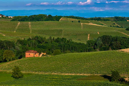 Wonderful Vineyards and Woods on the Montalbera Hillside located in the Municipality of Castagnole Monferrato Piedmont Italy, the sky is blue Banco de Imagens