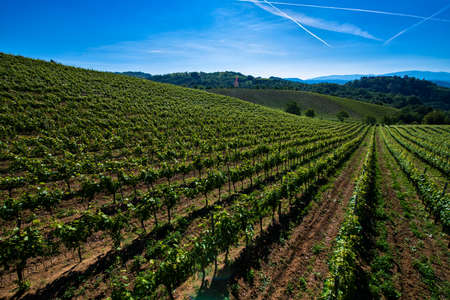 Wonderful vineyards and woods on the Cascina Saliceti hillside site in the Municipality of Montegioco Piedmont Italy, the sky is blue Banco de Imagens - 127788524