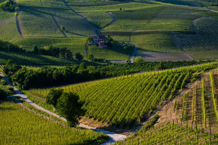 Wonderful vineyards and woods on the Sarmassa hillside located in the Municipality of Barolo Piedmont Italy, the sky is blue with beautiful clouds Banco de Imagens - 127788525