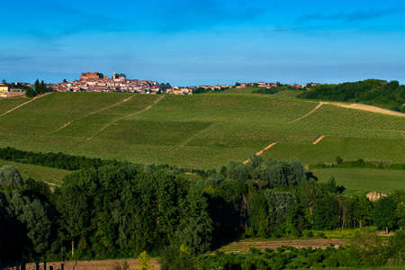 Wonderful Vineyards and Woods on the Montalbera Hillside located in the Municipality of Castagnole Monferrato Piedmont Italy, the sky is blue Banco de Imagens - 127788526