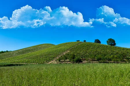 Wonderful vineyards and woods on the Monte DellOlmo hillside located in the municipality of Vinchio Piemonte Italy, the sky is blue with fantastic clouds Banco de Imagens