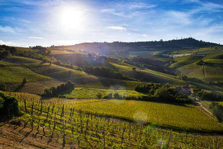Wonderful vineyards and woods on the Sarmassa hillside located in the Municipality of Barolo Piedmont Italy, the sky is blue with beautiful clouds Banco de Imagens - 127788528