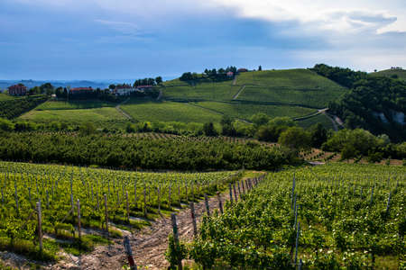 Wonderful vineyards and woods on the Cappelletto hillside site in the Municipality of Trezzo Tinella Piedmont Italy, in the sky you see a thunderstorm coming Banco de Imagens - 127788532