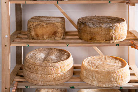 Forms of aged cheese on the shelf for maturing Stok Fotoğraf